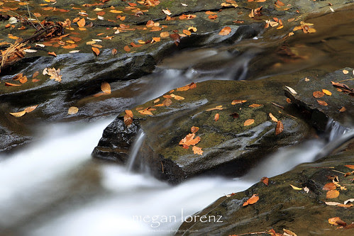 Flow by Megan Lorenz