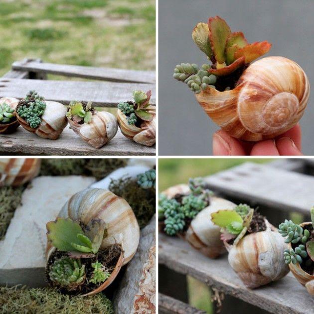 10 DIY Inspiring Garden Pots - Make your own miniature shell garden.