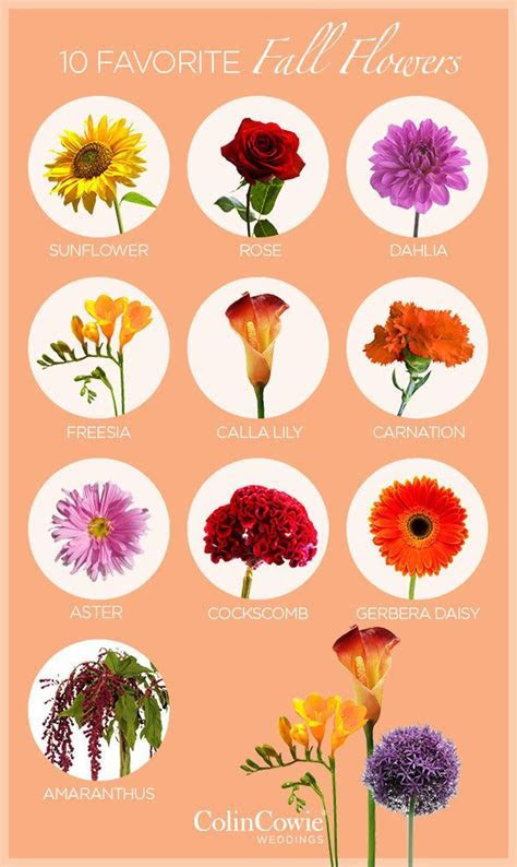 25  best ideas about Fall wedding flowers on Pinterest