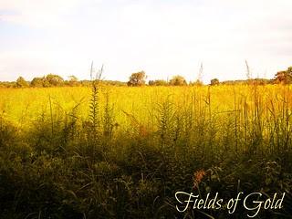 Fields of Gold, Willowwood!