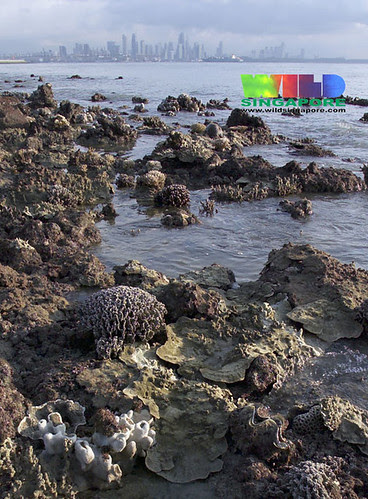 Living reefs of Kusu Island, Singapore