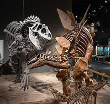 Velhos dinossauros
