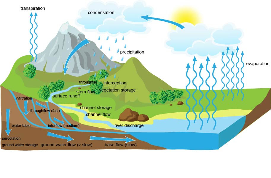 relationship between different components of ecosystem restoration