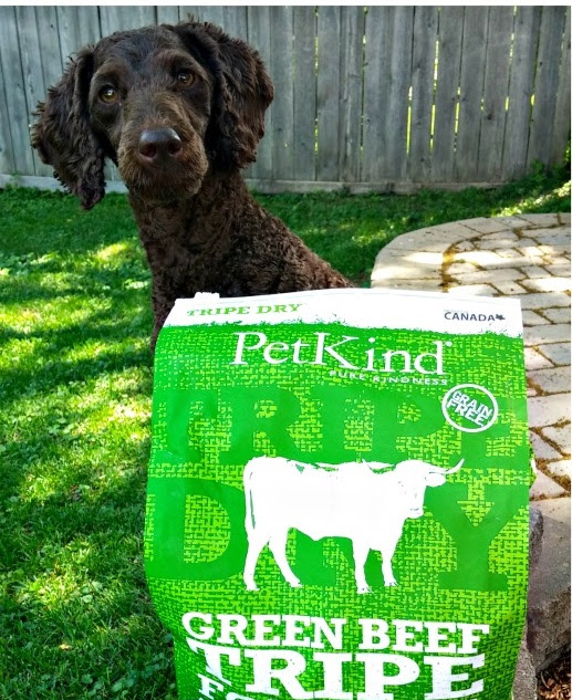 Talking Poop About Dog Food