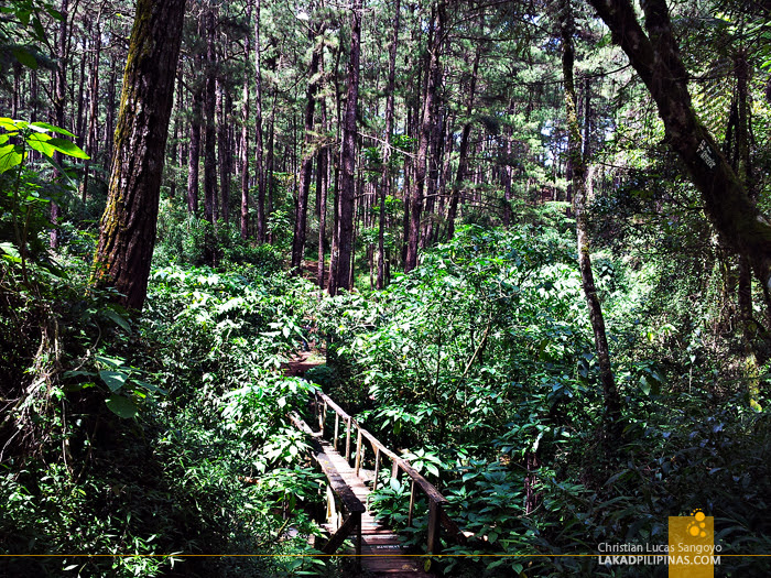 Camp John Hay's Eco Trail in Baguio City