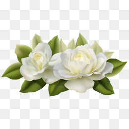 White Flowers Png Images