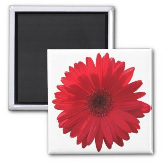 Red Daisy Magnet magnet