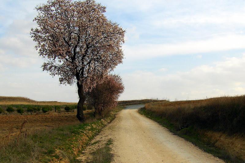 Camino de Carranque