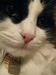 Josie closeup