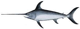 Sverdfisk