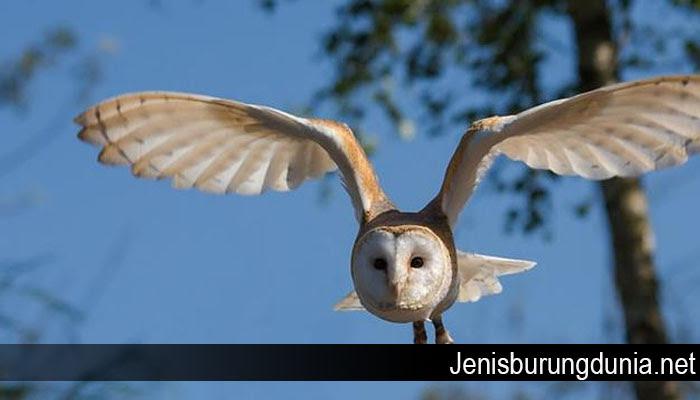 Download 66 Foto Gambar Burung Merpati Hitam  Paling Keren Free