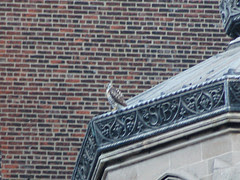 Divine Red-Tailed Hawk on Cathedral Chapel Roof