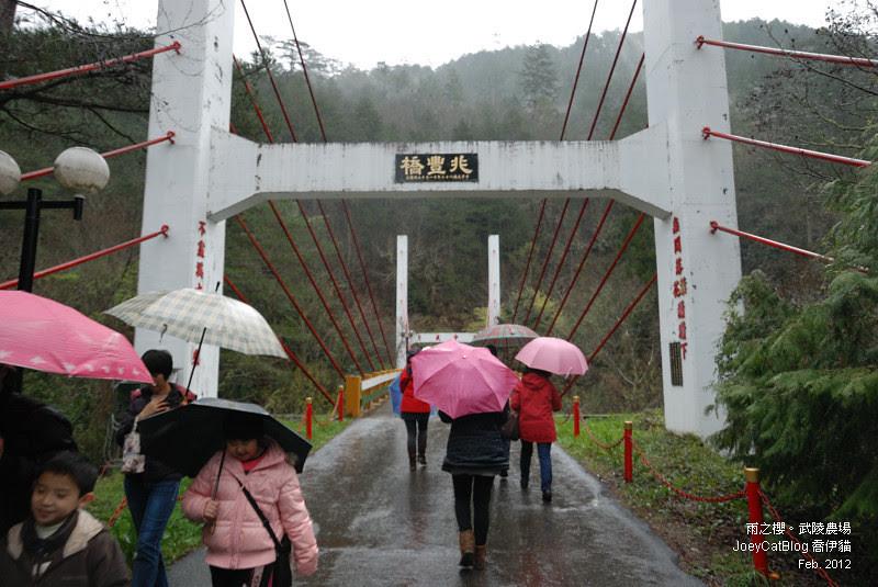 2012_0227_雨之櫻。武陵農場DSC_4288_08
