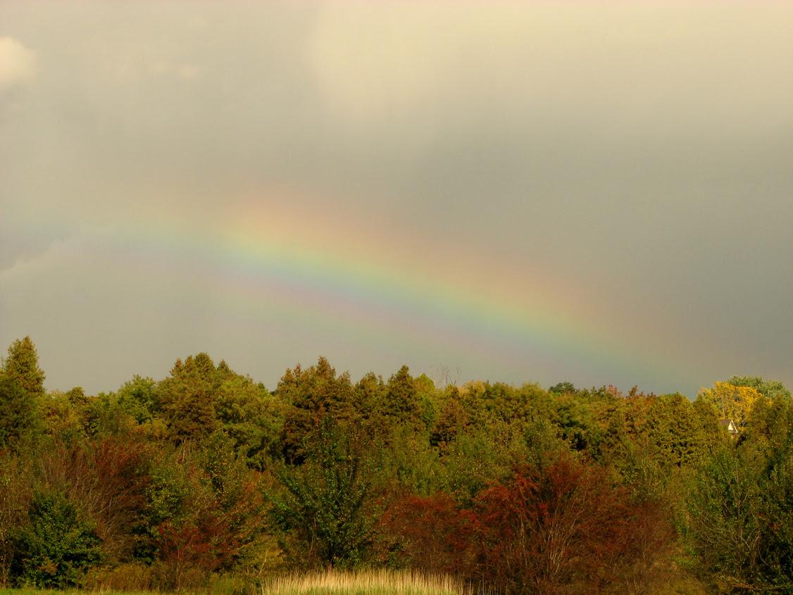 b-rainbow