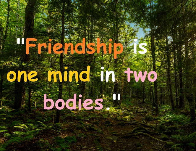 61 Beautiful Quotes On Friendship Share With Your Friends