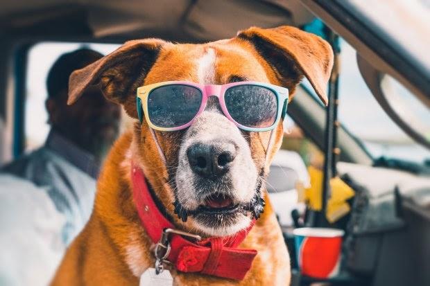 8 consejos que te ayudarán a mantener a tu perro fresco durante los días más calurosos