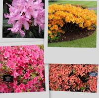 Rhododendron collage