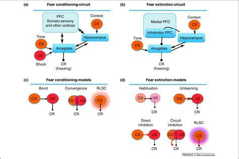 Fear conditioning and extinction: emotional states encoded by distinct signaling pathways