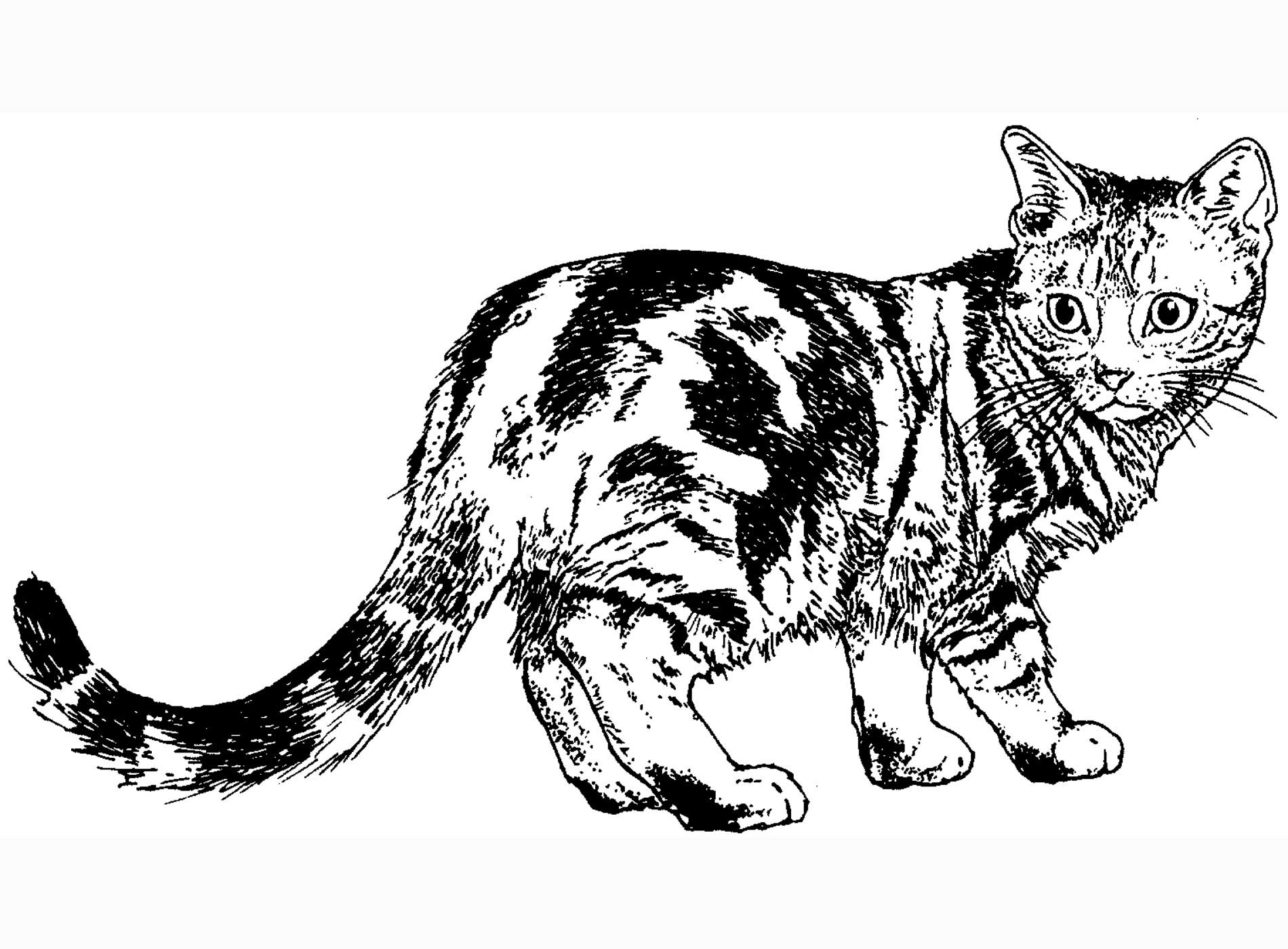 62 Top Coloring Pages A Cat Pictures