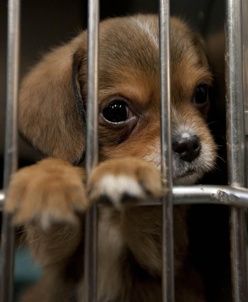 http://thewondrous.com/wp-content/uploads/2011/05/Pensive-puppy.jpg