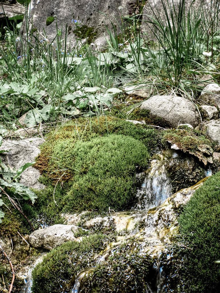 Ceahlău Massif Moss