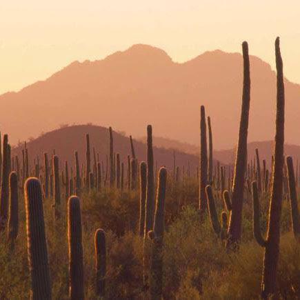 Cactus-Yucca Scrub