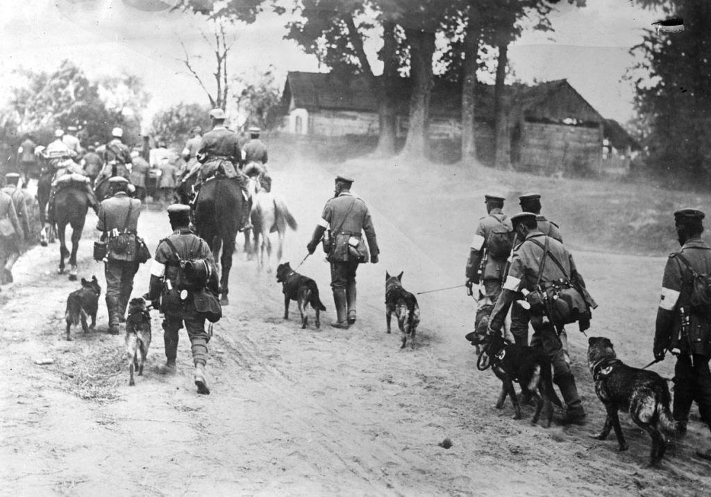 Os animais também lutaram na Primeira Guerra Mundial 26