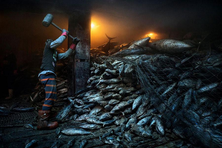 50 лучших фотографий года от National Geographic 19
