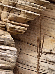 Weathered Cliff Face and Plant