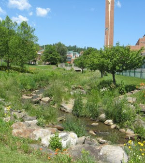 A restoration on Boone Creek at Durham Park maintains manicured vegetation that provides no shade to the over-warm stream (Photo courtesy of Kristan Cockerill)