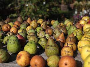 pommes-poires-varietes-anciennes