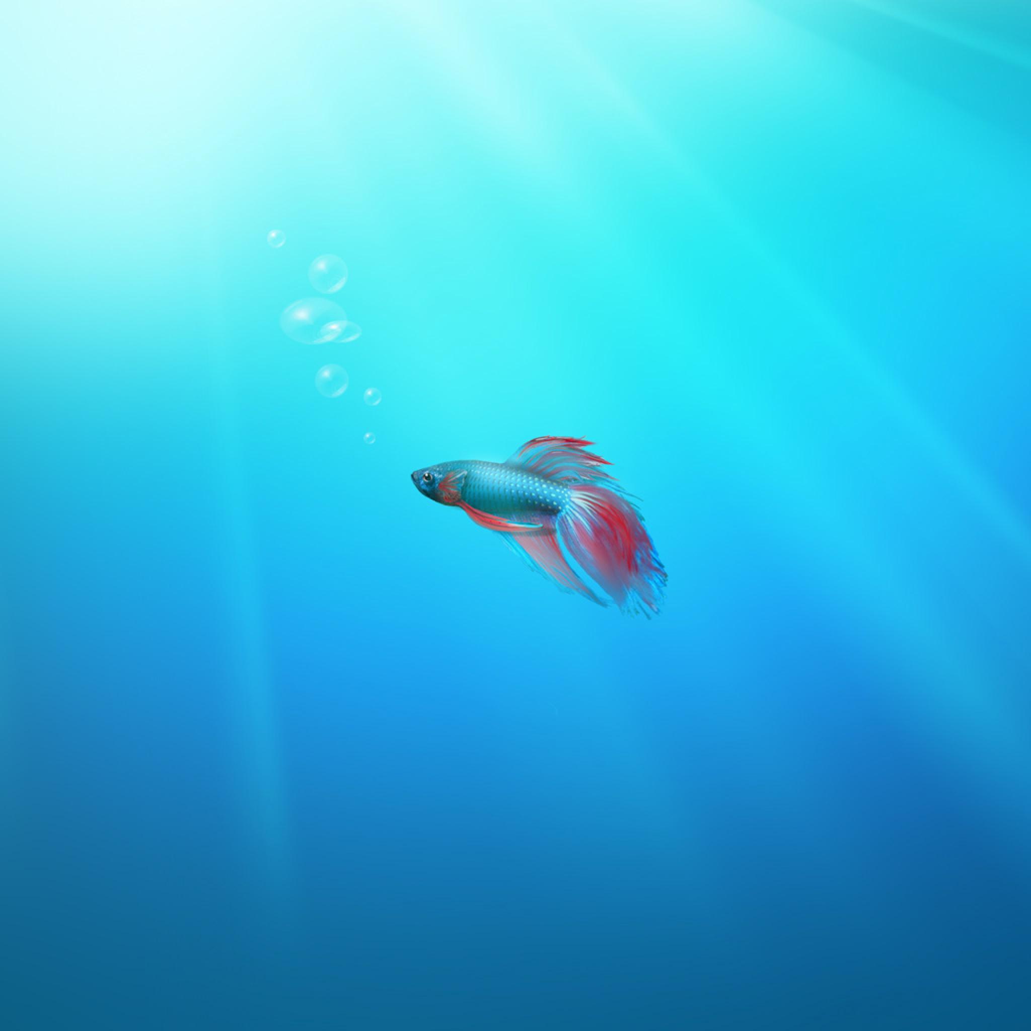 Computers - Windows 7 Beta Fish Wallpaper - iPad iPhone HD ...