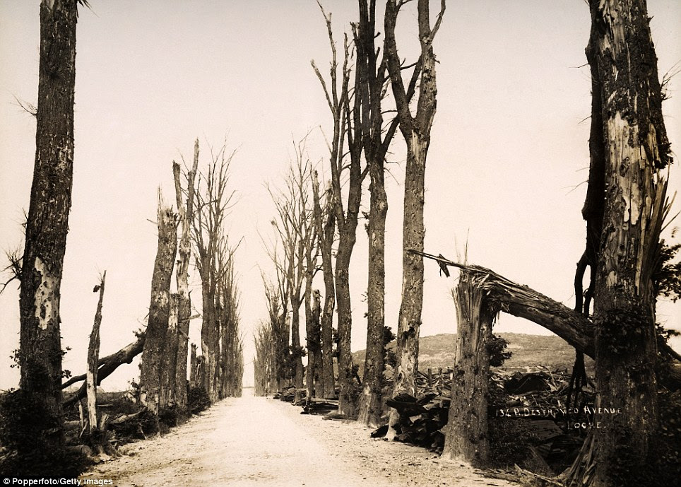 Felled: Trees along an avenue in Locre, Belgium, lie torn to shreds. These images are from a series documenting the devastation caused along the Western Front