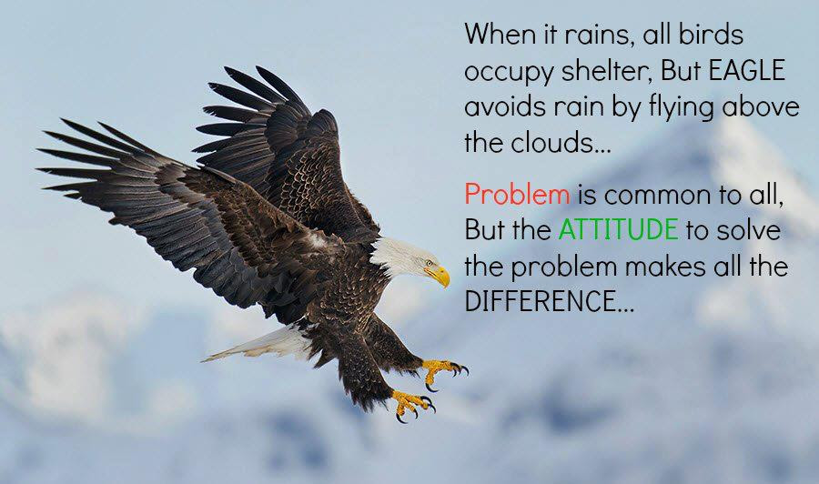 Quotes About Eagles 151 Quotes