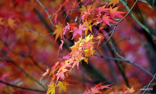 un poco más de otoño 25-11-2010 18-31-01