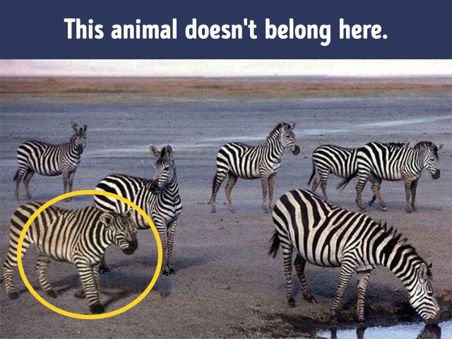 Test: Can you say what's wrong with these pictures in just ...