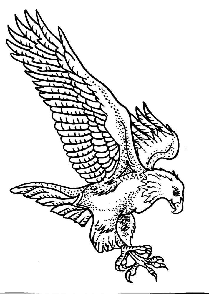Disegno Aquila Da Coloraredisegno Falco Da Colorare