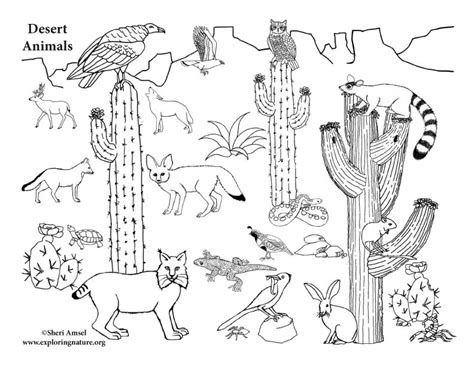 desert animals coloring pages az sketch coloring page
