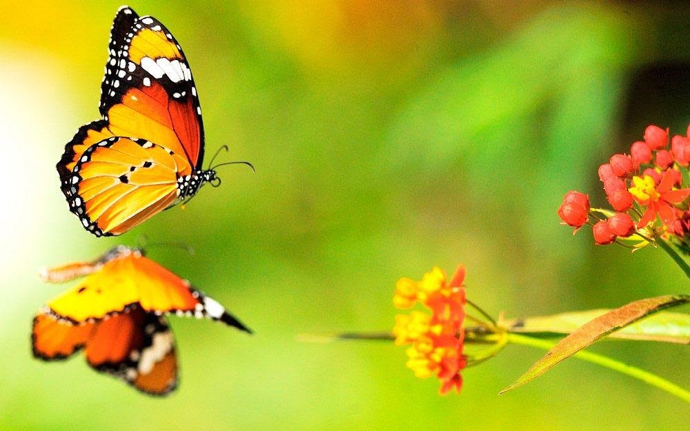 Mariposas Bonitas Imágenes Y Fotos