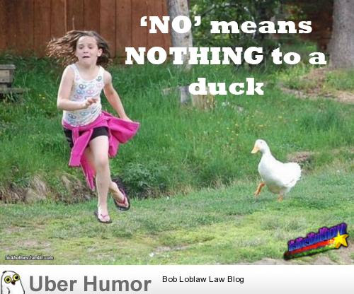 Ducks Dont Care Funny Pictures Quotes Pics Photos Images