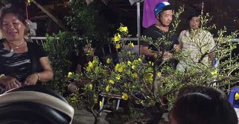Đi chợ đêm mua mai Tết ở bến Bình Đông