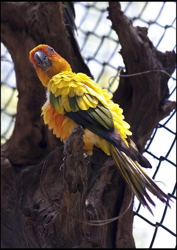 Parrot - Are you talking to me?