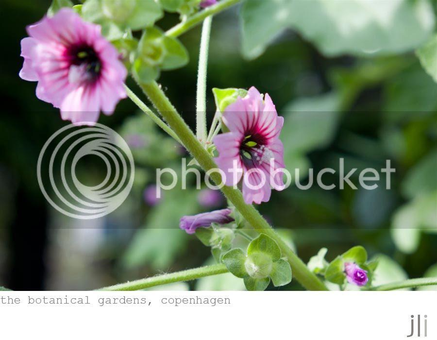 the botanical gardens, copenhagen photo garden-1_zps1626f403.jpg