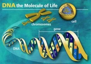 ΤΟ DNA ΑΝΤΙΔΡΑ ΣΤΟΝ ΗΧΟ ΤΩΝ ΛΕΞΕΩΝ
