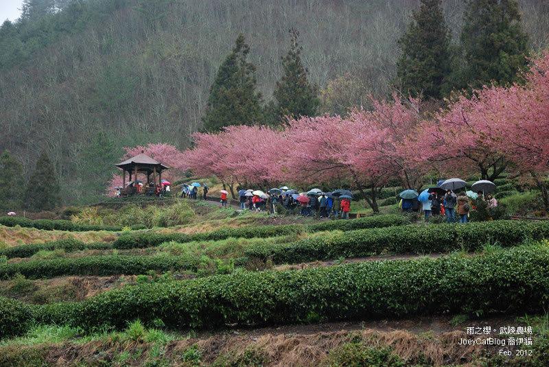 2012_0227_雨之櫻。武陵農場DSC_4299_12