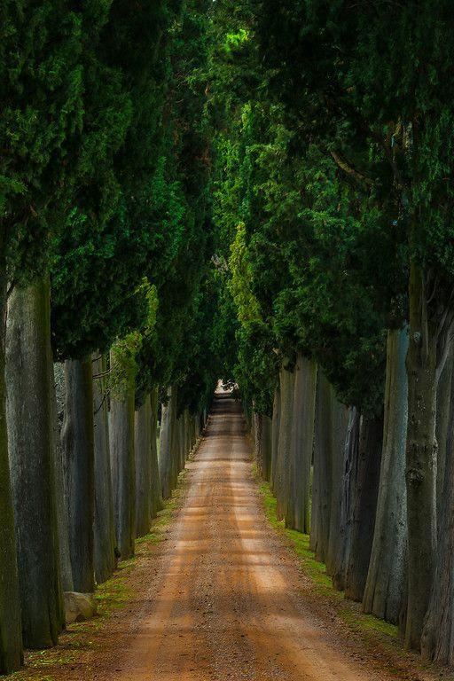 Tuscan Villa Moments - Val d'Orcia Region, Tuscany, Italy