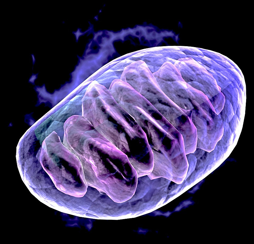 The Mighty Mitochondria — AquaNew