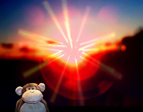 Sunning the monkey