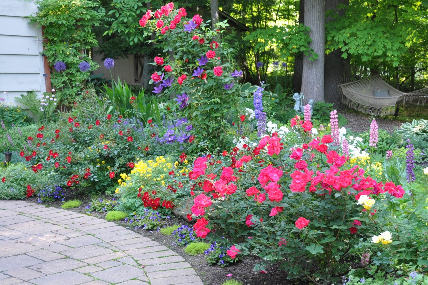List Of Synonyms And Antonyms Of The Word Knockout Rose Garden Designs