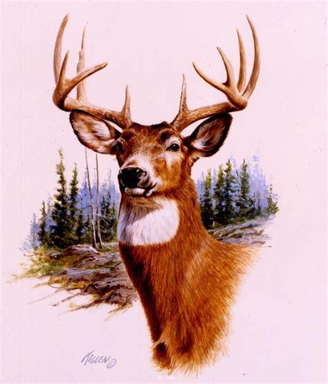 prize buck whitetail deeroriginal watercolor  private